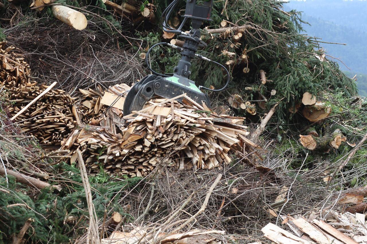 biomasa, restos forestales